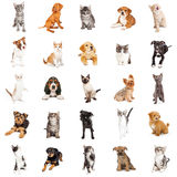 Large Group of Puppies and Kittens Royalty Free Stock Image