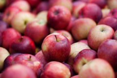 Large Group Of Red Apples Royalty Free Stock Photography