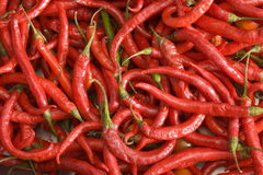 Large group of red chilli peppers, close-up (full frame, still life) Royalty Free Stock Image