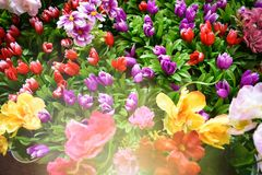 Large Group Spring Flowers Together With Bright Sunlight Shining On Them royalty free stock photo