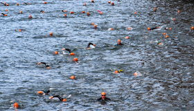 Large group of Swimmers Stock Photography