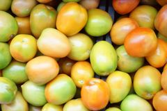 Large group of tomatoes. At selling vendor in supermarket Stock Images