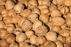 Large group of walnuts Royalty Free Stock Image