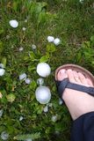 Large hail on grass Stock Photography