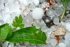 Large hailstones with green leaves. Fallen green leaves with large hailstones Stock Photos