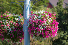 Large hanging basket with vibrant flowers Royalty Free Stock Image