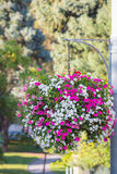 Large hanging basket with vibrant flowers Royalty Free Stock Photos
