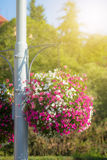 Large hanging basket with vibrant flowers Stock Photography