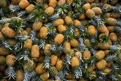 Large harvest of fresh pineapples stacked in pile stock photo