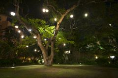 Large Hawaiian Tree with lights on it at night Royalty Free Stock Photo