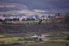 Large hawk soaring over valley villiage. stock photography
