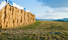 Large hay bails. Stacks of hay bails on an open field in north idaho royalty free stock photography