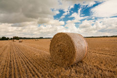 A large hay bale after the harvest. The large hay bale stands on the ground after the harvest is done Royalty Free Stock Image