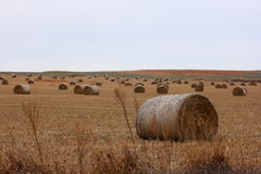 Large Hay Bales. A field of large round hay bales in North Central Kansas. Photograph taken on a cold early December morning Stock Photo