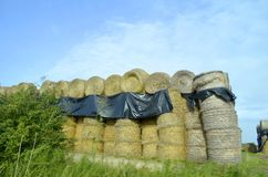 Large hay bales Stock Photography