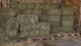 Large haystack in the barn on the farm. stock footage
