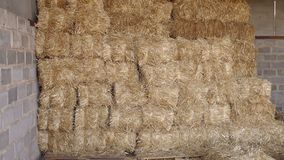 Large haystack in the barn on the farm. stock video footage
