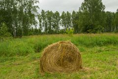 A large haystack of dry hay at the time of harvesting and rolled royalty free stock photography