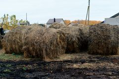large haystacks in the countryside Stock Image