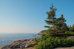 Large healthy pine trees growing on the Pink Granite boulders an Royalty Free Stock Images