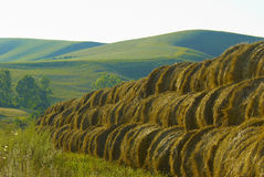 Large heap of hay Stock Image