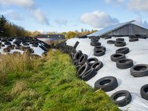 Large heap of silage as animal fodder covered in rubber tires and white plastic on farm in North Germany Stock Photography