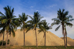 Large heaps of yellow building sand behind row of palms Royalty Free Stock Images