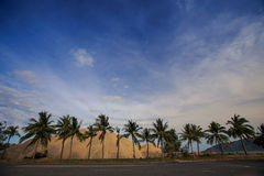 Large heaps of yellow building sand behind row of palms Royalty Free Stock Photos