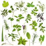 Large Herb Leaf Selection Stock Photo