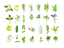 Large Herb Leaf Selection Stock Image