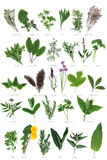 Large Herb Selection Stock Images