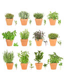Large Herb Selection in Pots. Large herb plant selection growing in terracotta pots with leaf sprigs. Rosemary, mint, bay, parsley, basil, oregano, purple sage stock photo