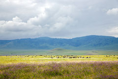 Large herds of wild animals grazing in the valley Royalty Free Stock Photo