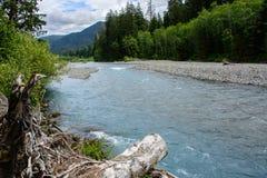 Large Hoh River en parc national olympique, Washington, Etats-Unis Photos stock