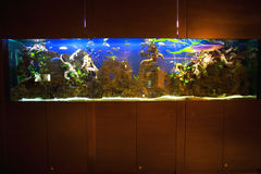 Large home aquarium. With plants, fishes and ornaments Royalty Free Stock Photos