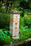 Large Honey Bee Apiary. A large colony of honey bees live in this tall and bustling apiary Royalty Free Stock Photos
