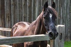 Large horse outside the barn Stock Photo