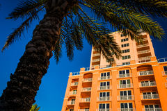 Large hotel and a palm tree in Clearwater Beach, Florida. Royalty Free Stock Photography