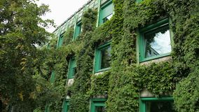 Large house completely overgrown with bushes, many Windows with green frames. Botanical garden, summer day, clear weather, slow motion stock video