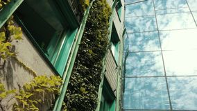 Large house completely overgrown with bushes, many Windows with green frames. And plate glass, which reflects the blue sky with clouds, Botanical garden, summer stock footage