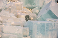 Large ice cubes Royalty Free Stock Photos