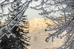 Large ice needles on branches. Organe illuminated mountain in background. Beautiful ice needles sitting on branches and a wonderful organe illuminated mountain Stock Image