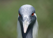 The large image of a  stork Royalty Free Stock Photos