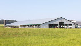 Large Industrial Alberta Cattle Barn Royalty Free Stock Photos