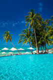 Large infinity swimming pool on the beach with palm trees Royalty Free Stock Photo