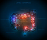 Large intestine abstract blue design Royalty Free Stock Image