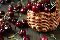 Large and juicy ripe cherries in a basket Royalty Free Stock Photos