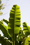 Large jungle leaf stock photography
