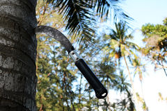 Large knife stuck on the coconut trees. Stock Photos