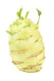 Large Kohlrabi (German Turnip) Isolated on White Background Royalty Free Stock Photography